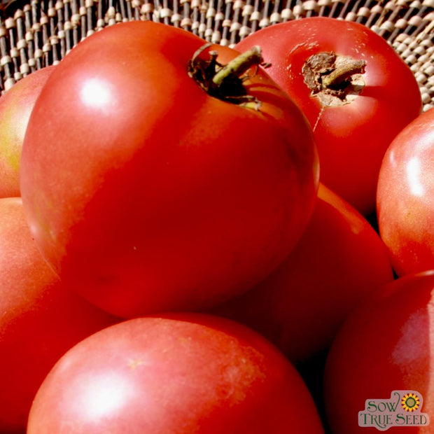 Organic Tomato seeds - Arkansas Traveler : Heirloom reliable slicing variety with high tolerant to heat, disease, and humidity.