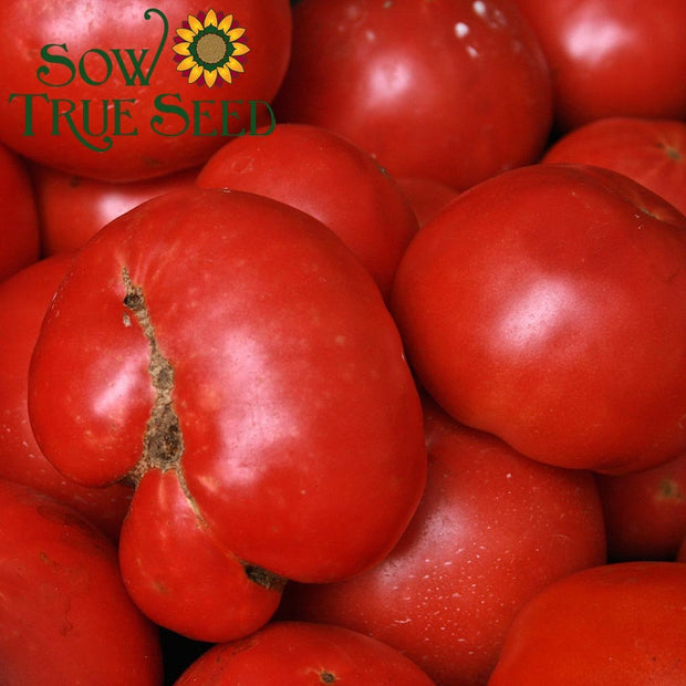Tomato, Slicing - Pink Brandywine, ORGANIC - Sow True Seed