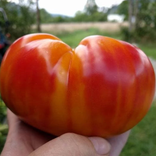 Slicing Tomato - Mr. Stripey - Sow True Seed