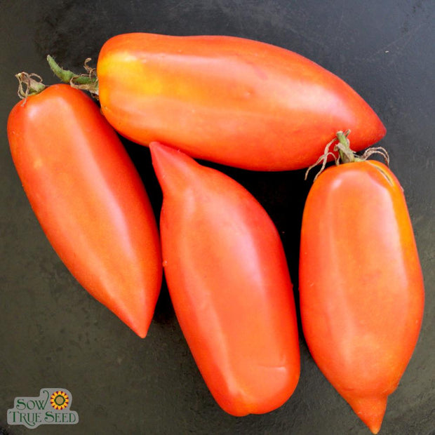 "Tomato seeds - San Marzano : Heirloom compact and prolific producer of bright red 2-3"" plum-type fruit."