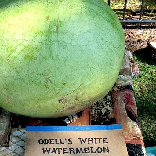 Watermelon - Odell's White - Sow True Seed