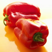 Sweet Pepper - Yolo Wonder - Sow True Seed