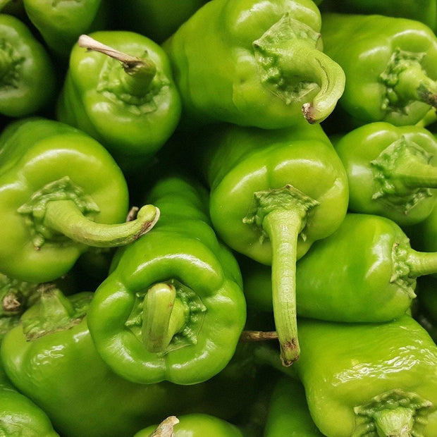 Hot Pepper - Anaheim Chili, ORGANIC - Sow True Seed