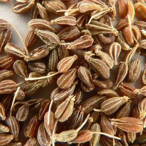 "Herb seeds - Anise : Grows 18"" high of secondary featherlike leaves, used as a culinary spice, oil, and tea. Annual."