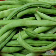 Half Runner Bean - Mountaineer White - Sow True Seed