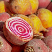 Beet - Chioggia, ORGANIC - Sow True Seed