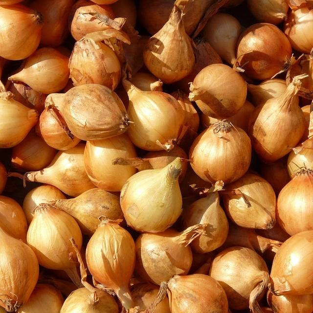 Organic Shallot- Dutch Yellow, Pre-Order Item