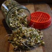 USDA Organic Mung Bean Sprouting Seeds