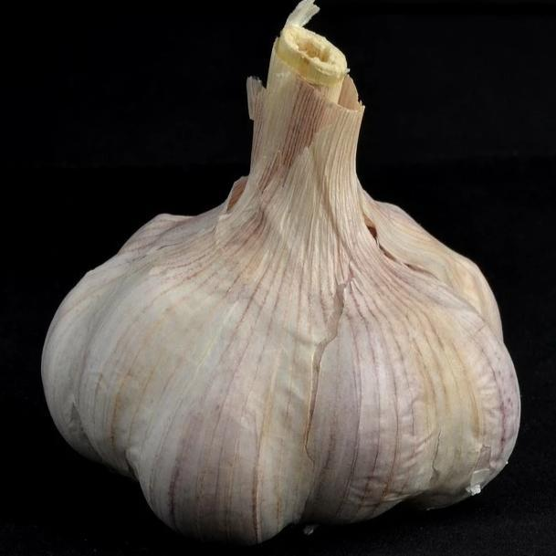 Hardneck Garlic - Georgian Crystal - Sow True Seed