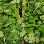 Herb - Cilantro, Slo-Bolting - Sow True Seed
