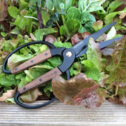 Garden Supply - Large Scissors - Sow True Seed