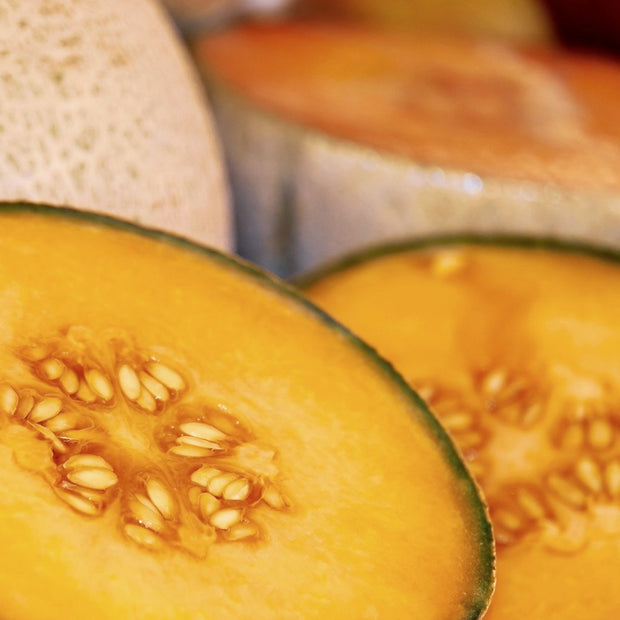 Edisto 47 seeds- Southern favorite melon resistant to alternaria, powdery and downy mildews.