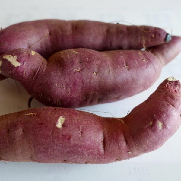 Sweet potato slip, Murasaki Japanese sweet potato root crop