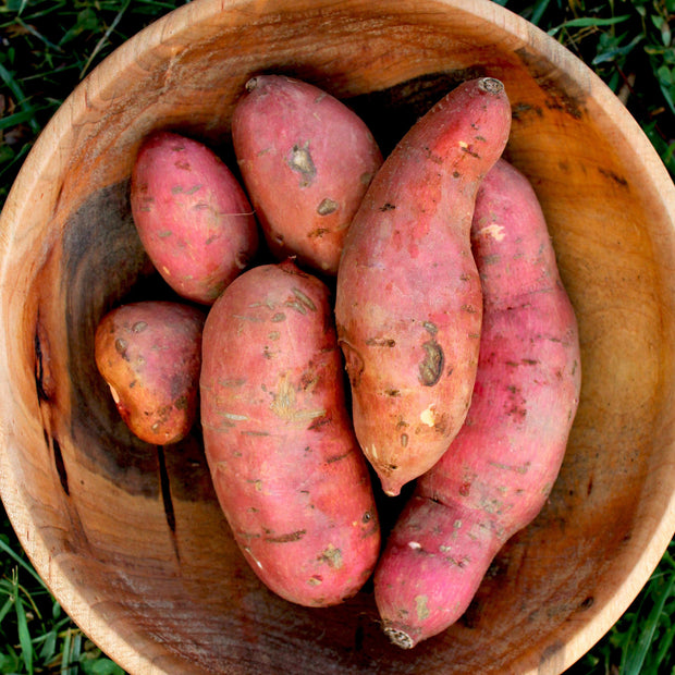 May 29 2019: Growing Sweet Potatoes