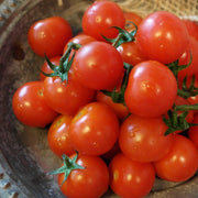 Cherry Tomato - Tiny Tim, ORGANIC - Sow True Seed
