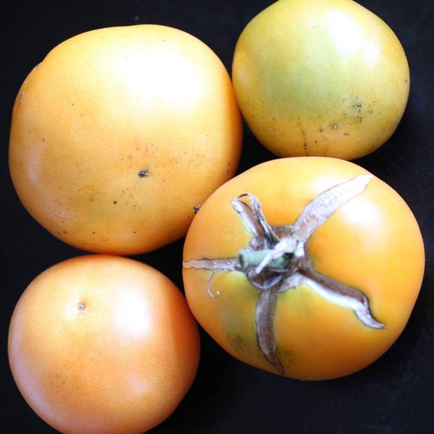 Slicing Tomato - Persimmon - Sow True Seed
