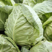 Cabbage - Early Jersey Wakefield - Sow True Seed