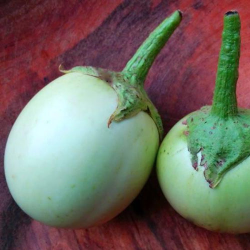 Organic Eggplant, Applegreen, non-bitter variety bred to tolerate cool short seasons.