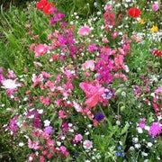 Flower Mix - Cut Flower - Sow True Seed