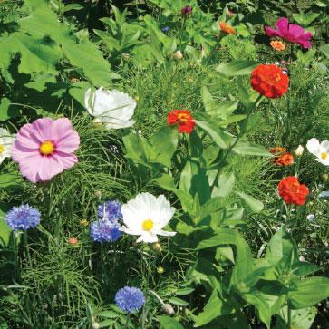 Flower Mix - Beneficial Attractant - Sow True Seed