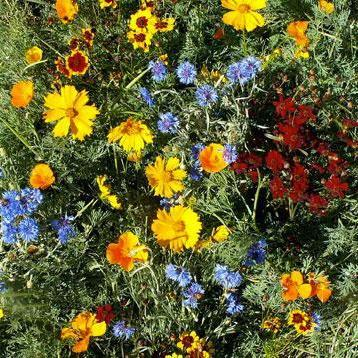 Flower Mix - Low Grow - Sow True Seed