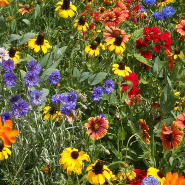 Flower Mix - South East Native - Sow True Seed