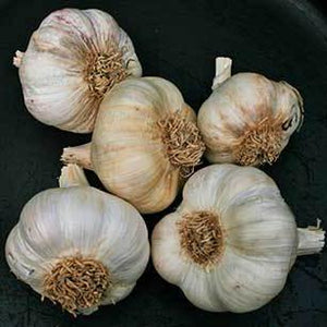 Garlic Sampler