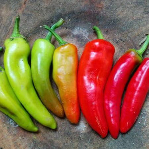 "Organic Hot Pepper seeds- Hungarian Yellow Hot Wax : Heirloom medium hot pepper grows 5-8"" long."