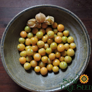 Husk Cherry - Drott's Yellow