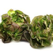 Bronze Mignonette heirloom lettuce seeds