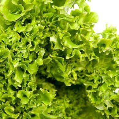 Tango Lettuce seeds, a cold hardy deeply serrated crunchy textured lettuce.