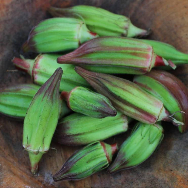 Okra seeds- Hill Country Red, Heirloom plump bright green pods with red tips. Great pickling okra.