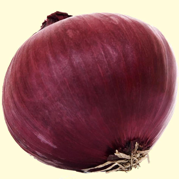 Onion seeds- Red Creole: Large red onion that grows well in the South. Good keeper. Short day.