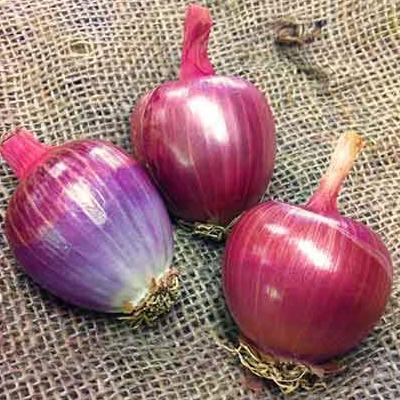 Onion seeds- Tropeana Tonda: Heirloom purple onion for fresh eating a storage.