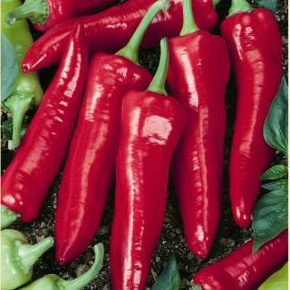 "Organic Hot Pepper seeds- Big Jim : Classic 8-12"" green to red chilis on 24"" plants."