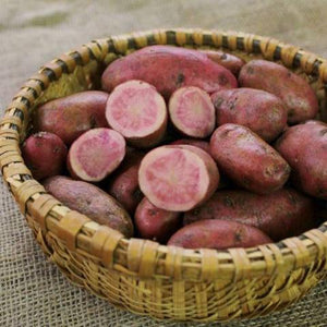 Potato -Red Thumb Fingerling, certified seed potato, organic