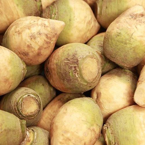 Rutabaga seeds - American Purple Top : Sweet yellow roots with fine flesh, high yields. Heirloom