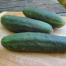 Organic Marketmore 76 Cucumber seeds, cucumber resistant to downy mildew mosaic virus and leaf spot