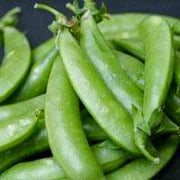 Snap Pea - Sugar Snap - Sow True Seed
