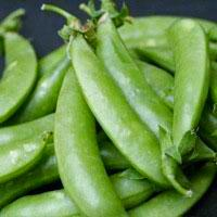 Snap Pea seeds- Sugar Snap : High yielding crunchy sweet popular variety that will need trellising for the 4-5' vines.