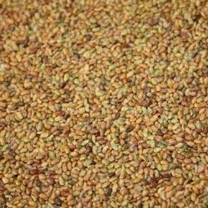 Organic Sprouting Seeds - Alfalfa : Perennial, leguminous crop high in protein and mineral content.