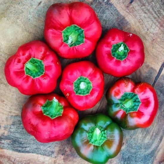 "Sweet Pepper seeds - Ashe County Pimento: Heirloom sweet pepper grow 3-4"" diameter and is a favorite for enjoying raw."