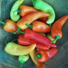"Sweet Pepper seeds - Sweet Banana: Heirloom popular variety of 6"" tapered fruits grown on 16-24"" plants."