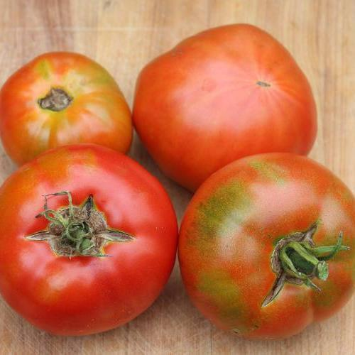 Slicing Tomato - Abe Lincoln, ORGANIC - Sow True Seed