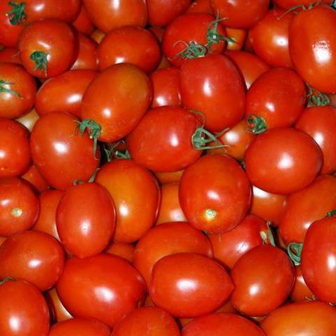 Organic Tomato seeds - Amish Paste : Heirloom highly productive vines with 8-12 oz. deep-red acorn shaped fruits. Indeterminate.