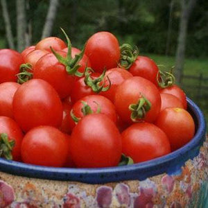 Tomato seeds - Principe Borghese : Determinate heirloom that makes the sweetest sundried tomatoes.