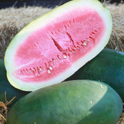 Watermelon seeds - Bradford Family : Unique family heirloom with tender rind and sweet flesh.