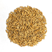 Cover Crop - White Oats - Sow True Seed
