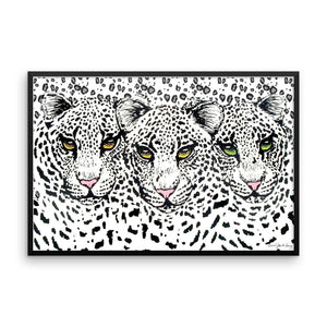 SNOW CHEETAHS Framed poster - COOOL CATS