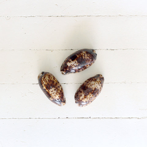 Brown Spotted Tortoise Cowrie Shell